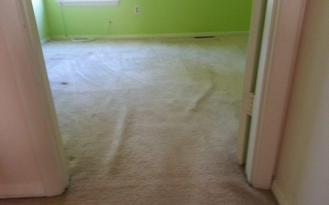 Carpet Stretching Maryland