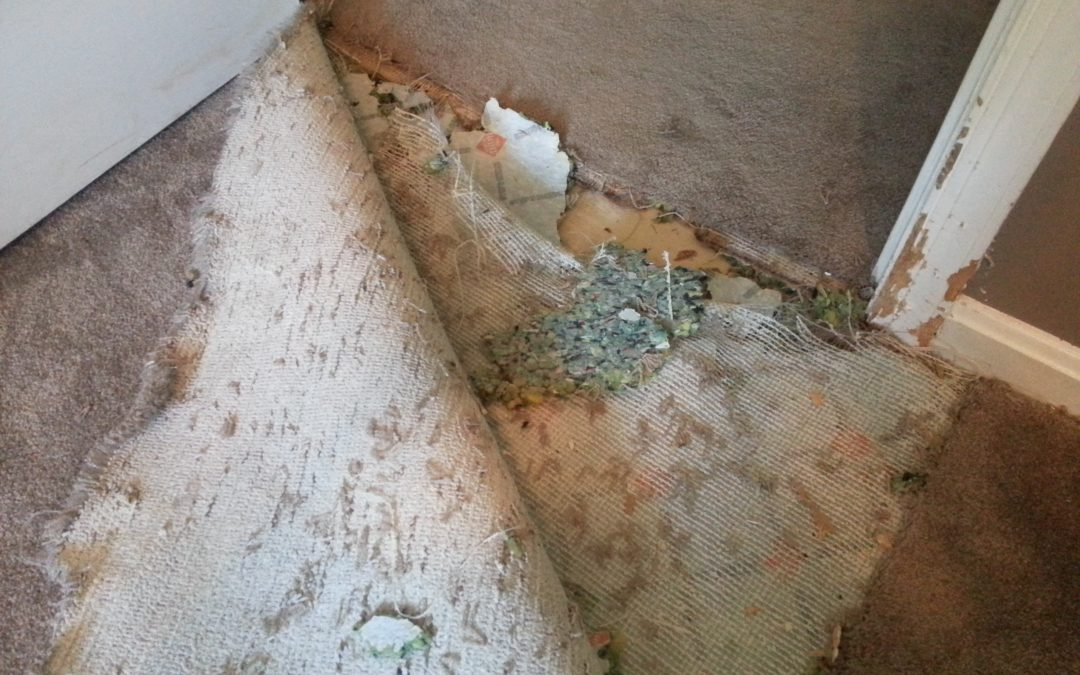 Carpet Repair and Cleaning Odenton Maryland