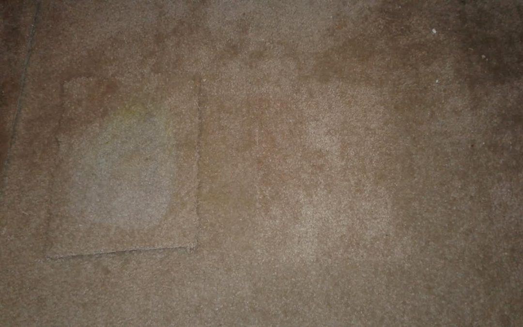 Carpet Stain Repair Laurel MD