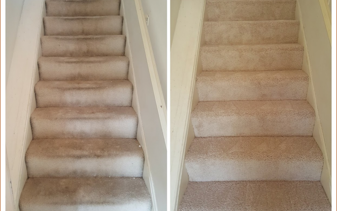 Carpet Cleaning Potomac MD
