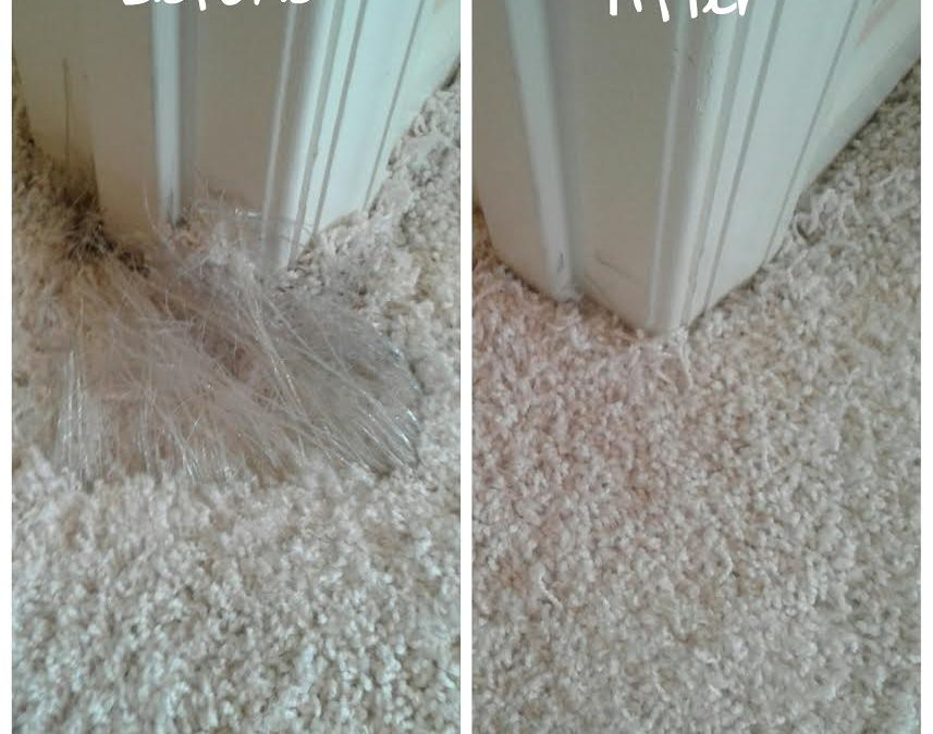 Pet Damage Carpet Repair Potomac Md