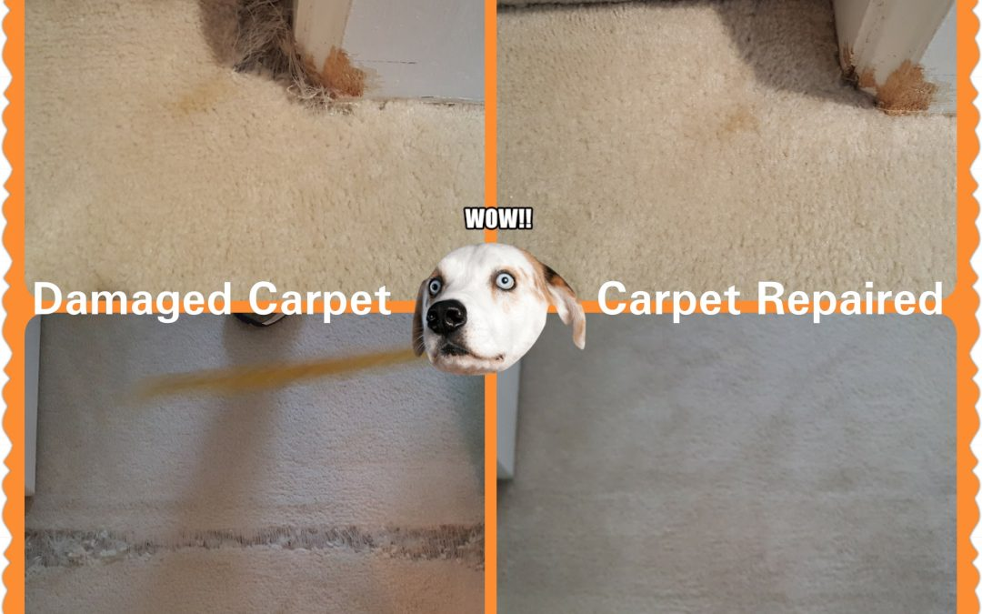 Carpet Repair Pet Damage Rockville MD
