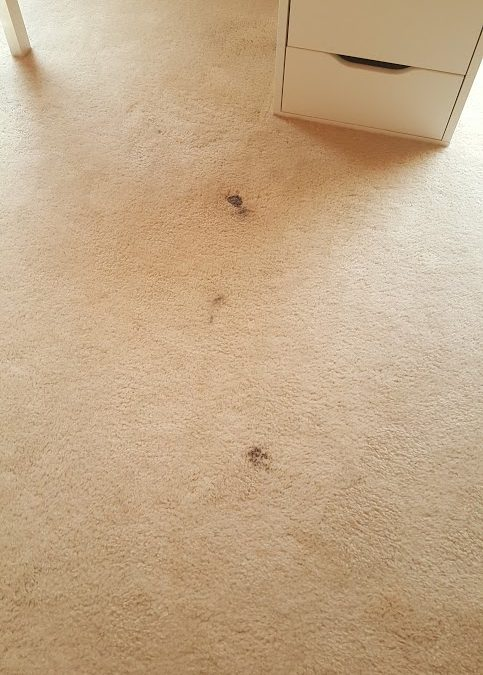 Rockville Carpet Stain Repair