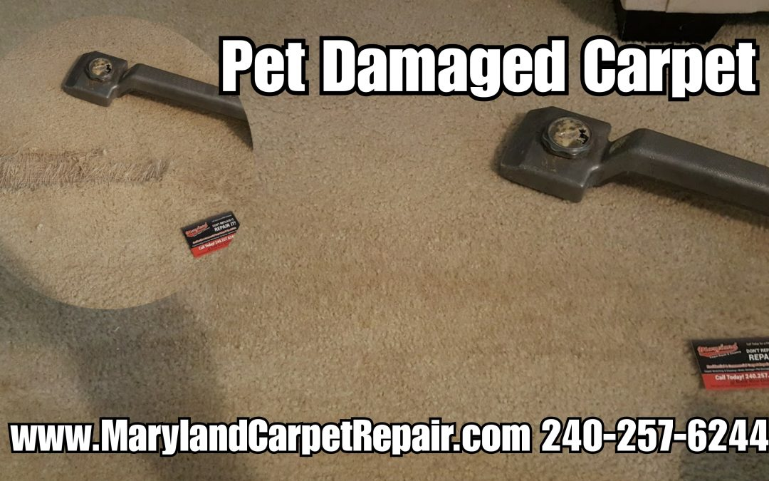 Carpet Repair Crofton MD