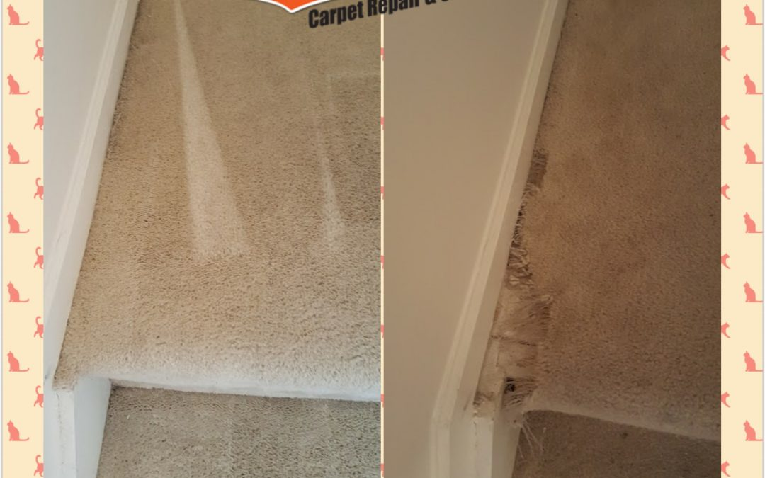 Carpet Repair Elkridge MD