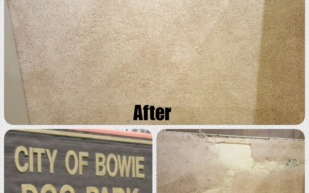 Bowie MD- Pet Damage Carpet Repair