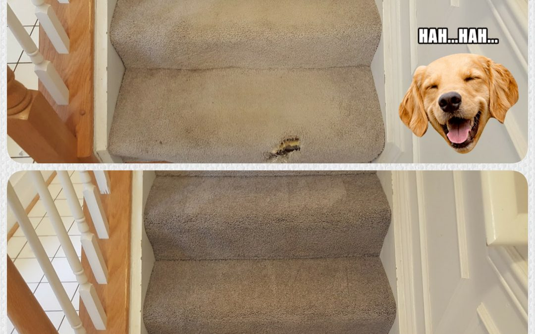Pet Damage Carpet Repair Bethesda MD