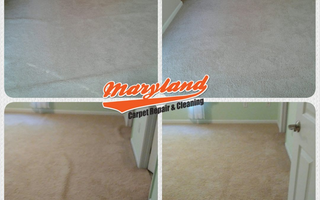 Crofton MD- Carpet Stretching