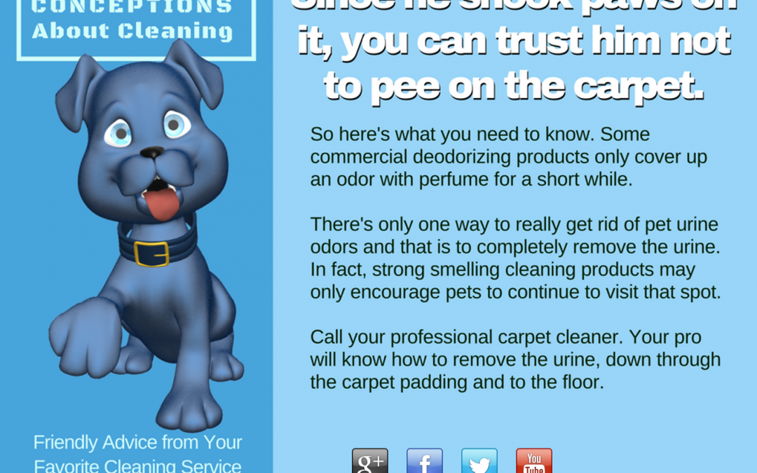 Pet Odor- Pet Urine- Carpet Cleaning Maryland