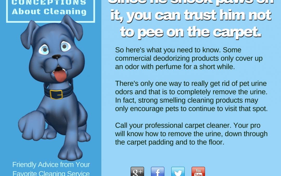 Pet Odor- Pet Urine- Carpet Cleaning Maryland