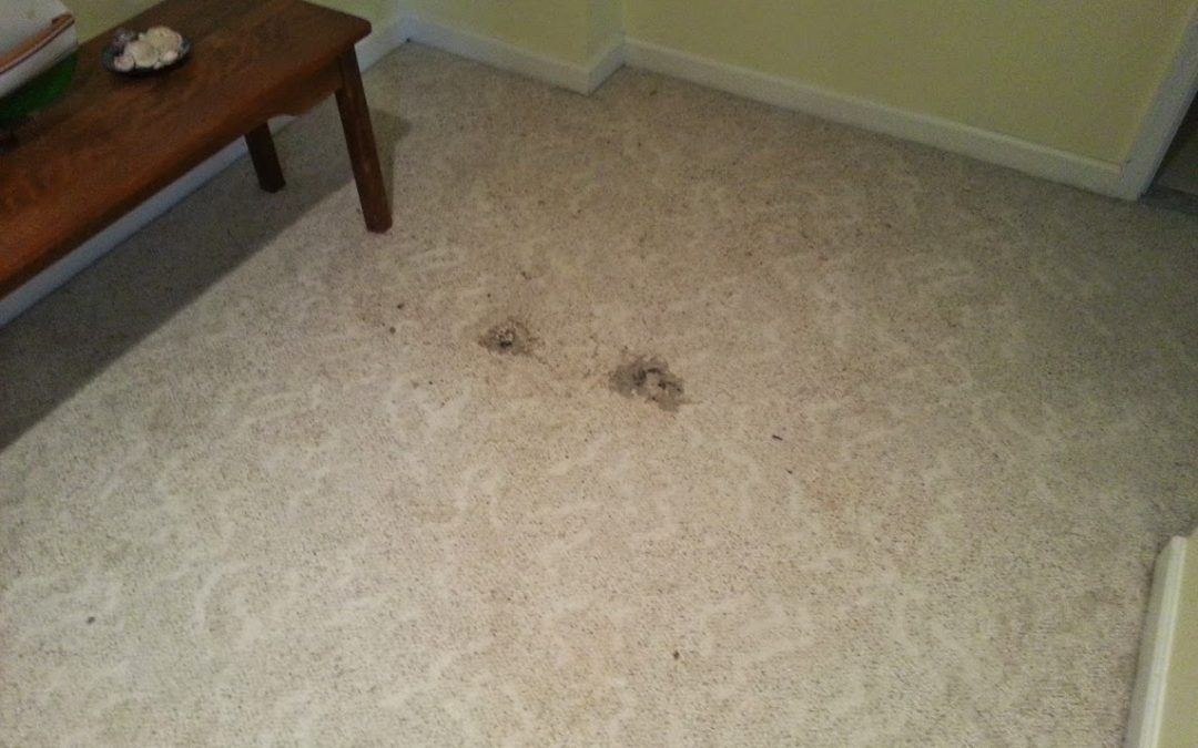 Carpet Repair in Bowie MD