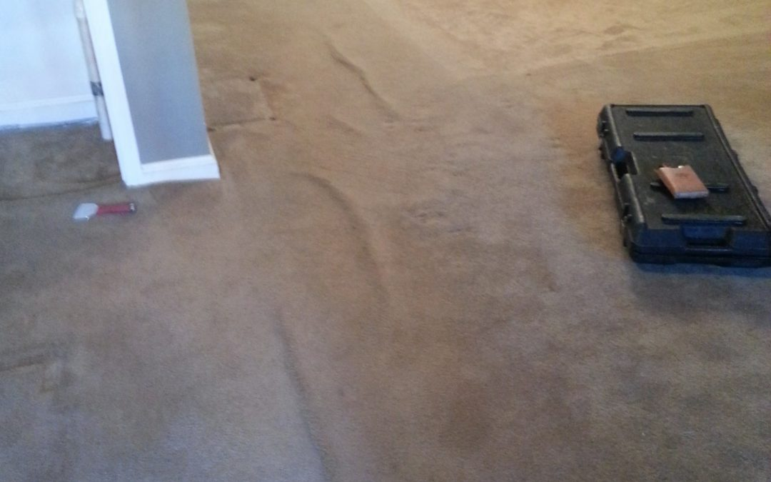 Maryland Carpet Stretching and Carpet Cleaning Bethesda MD