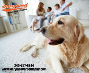 Maryland Carpet Repair and Cleaning