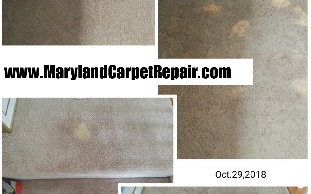 Carpet Repair in Bethesda MD